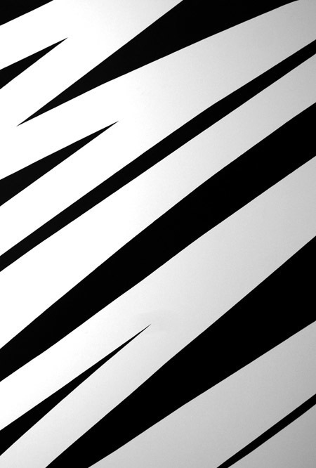 zebraDMa.jpg